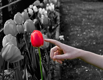 Ein Finder welcher auf eine rote Blume zeigt